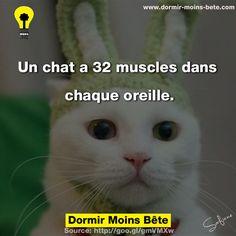 Un chat a 32 muscles dans chaque oreille.