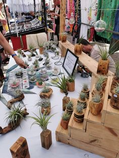 Our Tillandsia market stall Farmers Market Display, Market Displays, Air Plant Display, Market Stalls, Ficus, Air Plants, Outdoor Gardens, Flora, Table Settings