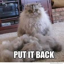 Funny pictures about Put it back right meow. Oh, and cool pics about Put it back right meow. Also, Put it back right meow. Funny Animal Pictures, Funny Animals, Cute Animals, Funniest Animals, Duck Pictures, Daily Pictures, Animal Pics, Angry Cat, Cute Kittens