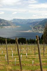Columbia Gorge: up in the vineyards