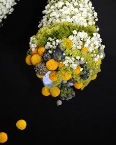 Alien YaU   © Sebastian Moise Moise, Dandelion, Flowers, Plants, How To Make, Dandelions, Plant, Taraxacum Officinale, Royal Icing Flowers
