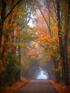 East Texas Fall..... wish I was here right now!