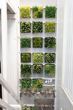 Vertical Farming, Going Up Instead Of Sideways – Greenest Way