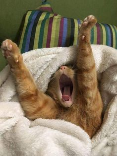 Time to yawn and stretch before I take a cat nap!