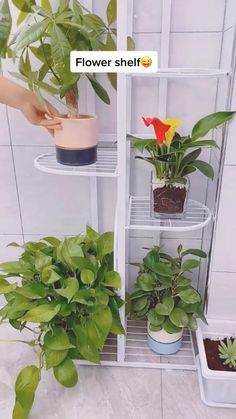 Ikea Plants, Small Plants, Indoor Plants, House Plants Decor, Plant Decor, Balcony Hanging Plants, Plant In Glass, Wood Plant Stand, Flower Stands