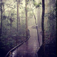 Skywalk Mt Glorious, Love the fog and rain Cairns, Travel Goals, Rainy Days, Brisbane, Roads, Walks, Places To See, Serenity, Art Work