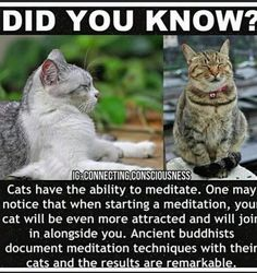 Cute Funny Animals, Cute Cats, Funny Cats, Animal Facts, Cat Facts, Crazy Cat Lady, Crazy Cats, Meditation, Wtf Fun Facts