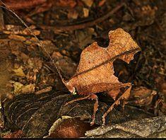 Praying Mantis, Beetles, Snails, Ladybugs, Nature Animals, Frogs, Animal Photography, Moth, Camouflage