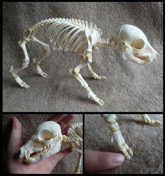 Juvenile Domestic Pig Skeleton by CabinetCuriosities on DeviantArt
