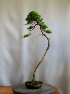 Bonsai Garden, Ikebana, Herbs, Landscape, Plants, Gardening, Shapes, Photography, Bonsai Trees