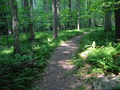 hiking trails | Hiking Trail at Ohiopyle