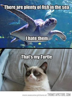 Grumpy cat is just.too funny! That's my Turtle. Grumpy Cat Quotes, Grump Cat, Funny Grumpy Cat Memes, Funny Animal Jokes, Cute Funny Animals, Funny Animal Pictures, Funny Cute, Funny Memes, Hilarious