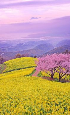beautiful landscapes and flowers Beautiful World, Beautiful Places, Beautiful Flowers, Spring Scenery, Science And Nature, Nature Pictures, Amazing Nature, Belle Photo, Pretty Pictures