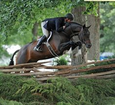 Beautiful horse bay Hunter jumper
