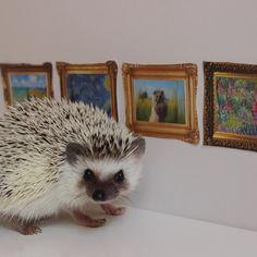 Hedgehog Heiress Funds Art Museum