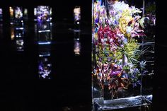 iced flowers - dries van noten - azuma makoto