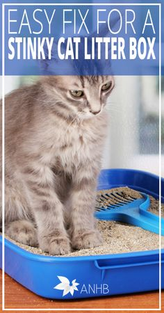 Easy Fix for a Stinky Cat Litter Box - All Natural Home and Beauty