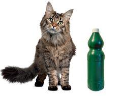 Hoje iremos falar de um tema que desperta a curiosidade dos donos de gatos: a paixão que alguns deles sentem pelo cheiro da água sanitária. Os gatos reagem de forma diferente aos estímulos que são…