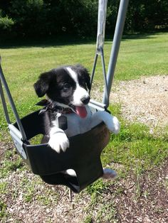 Bandit and his favorite thing to do at the park. - Imgur