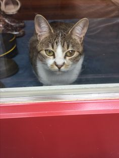 #ネコ お客様のところのネコちゃん。私のお庭作ってくれるの?って感じかな Cats, Animals, Gatos, Animales, Animaux, Animal, Cat, Animais, Kitty
