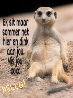Hello Good Morning Greetings, Good Morning Wishes, Morning Messages, Night Quotes, Morning Quotes, Qoutes About Love For Him, Cute Quotes, Funny Quotes, Lekker Dag