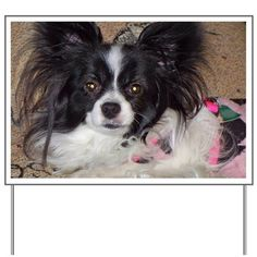 Papillon Yard Sign by - CafePress Exercise For Bad Back, Custom Yard Signs, Sign Printing, Yard Sale, Sign Design, Cute Animals, Dog, Holiday, Prints