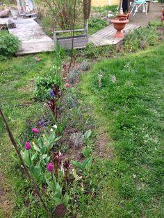 Pionipenkin piunit on vielä pieniä ja nuoria,kukkiiko jo tänävuonna?