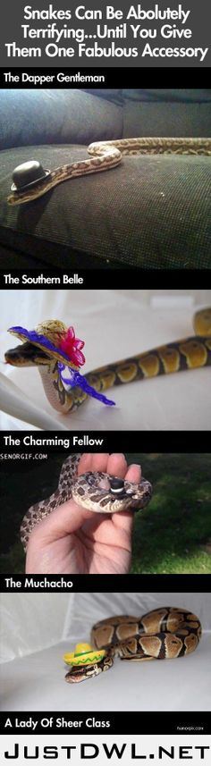 Snakes can terrifying...