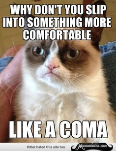 Grumpy Cat - why don't you slip into something more comfortable