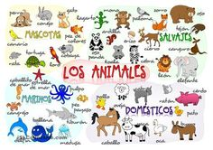 Learning about wild water pets and domestic animals vocabulary Spanish Phrases, Spanish Vocabulary, Spanish Lessons, How To Speak Spanish, Spanish Language, Learn Spanish, Spanish 1, English Lessons, Spanish Teacher