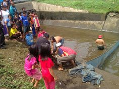 Pena Mas I'om: Karang Taruna Panen Ikan, Warga Serbu Bazar Ikan M...
