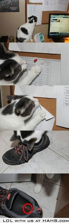 Funny pictures about More Proof Cats Are Jerks. Oh, and cool pics about More Proof Cats Are Jerks. Also, More Proof Cats Are Jerks photos. Crazy Cat Lady, Crazy Cats, Funny Cute, The Funny, I Love Cats, Cute Cats, Meme Comics, Animal Pictures, Funny Pictures