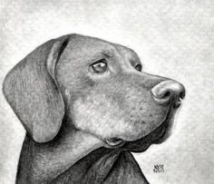 how to draw a dog head, dog head step 13