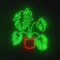 N E E D 🌿💡 The perfect move for this gray day we're having at our San Francisco HQ! Neon Light Signs, Neon Signs, Neon Word Lights, Neon Moon, Neon Words, Green Theme, Aesthetic Colors, Neon Lighting, Neon Green