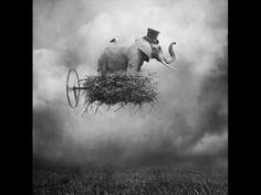 Coccolino Deep - Don't forget to fly - YouTube
