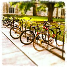 Bicycles at Newman Library