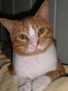 Fred. de leukste en aardigste kat.