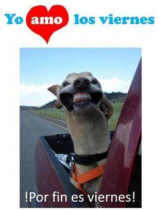 Que es viernes sí, en cuanto al perrito... :-/