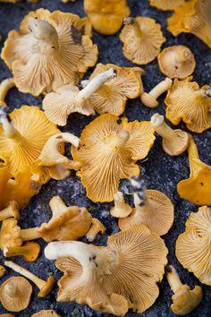 Wild mushroom hunting in Gothenburg and a Vasterbottenost and chantarelle mushroom tart…