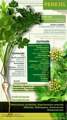 Beneficios del perejil. Infografía. Resumen de las características generales del Perejil. Usos medicinales más comunes, propiedades y beneficios del perejil.