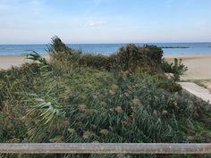 Pescara Fosso Vallelunga è di nuovo ostruito dalla vegetazione