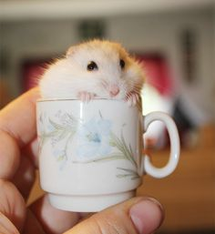 Hamster In A Cup. Bored Panda via flickr.
