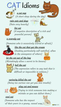 There are lots of English expressions based on animals – most especially the cat. Let's learn Idioms about CATS in English. English Fun, English Idioms, English Vocabulary Words, English Phrases, Learn English Words, English Study, English Lessons, English Grammar, French Lessons