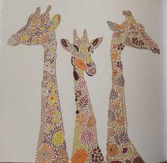 Giraffes From Millie Marottas Animal Kingdom Colouring Book October 2015