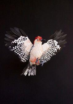 paper bird sculptures-Diana Beltran Herrera