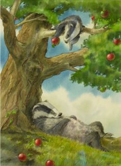 Wright, Cliff (b,1963)- Badger- Afternoon Nap -2b