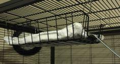 File Tray Rat Hammock - petdiys.com