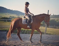 #eden#wallach#schritt#hvpolo #eskadron #dressage #dressur#pferd#horse#dressurpferd #dressagehorse#horseriding #equestrian #europaspferde #reiten#pferde#youngster #younghorse #3yo#ehrenstolz #rohdiamant#reitenmitherz#sommer#hg_picture