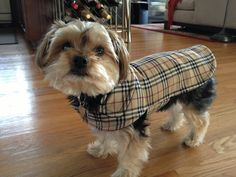 Dog Jacket  London Plaid Dog Coat Size Small 1214 by KozyCanines, $35.00 (Bought this for Buddy...she customized the size, and it came out great!)