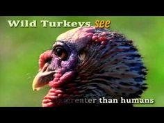 ▶ Turkey Trivia Thanksgiving 2012 - YouTube